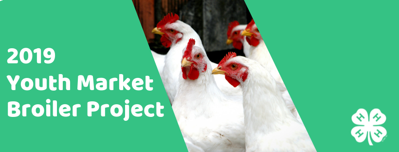 Youth Market Broiler Project 2019