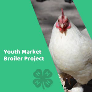 Cover photo for Youth Market Broiler Project 2019