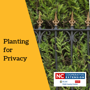 Cover photo for Privacy Matters: Screening Plants to Consider