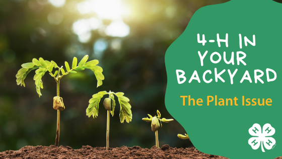 4-H In Your Backyard - The Plant Issue
