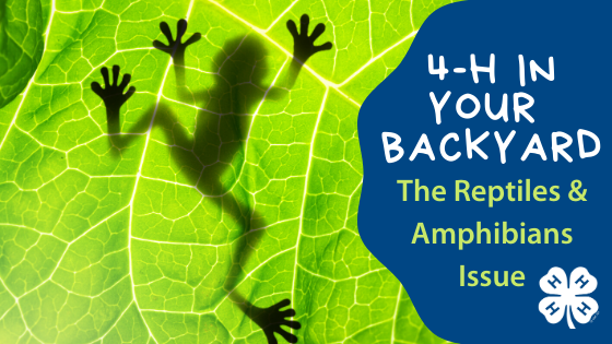 4-H in Your Backyard - Reptiles & Amphibians