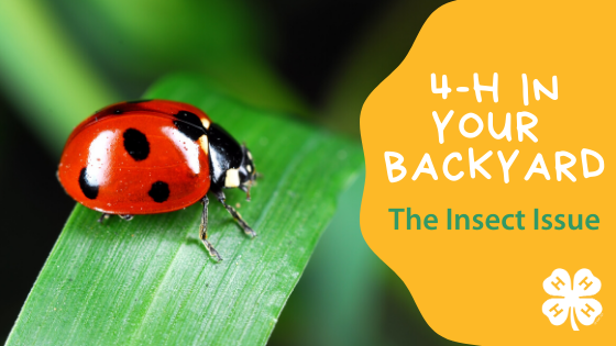 4-H in Your Backyard - The Insect Issue