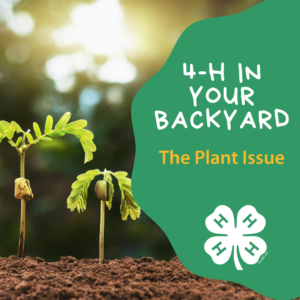 4-H in Your Backyard - The Plant Issue - Featured