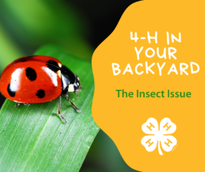 Cover photo for 4-H in Your Polk County Backyard: The Insect Issue