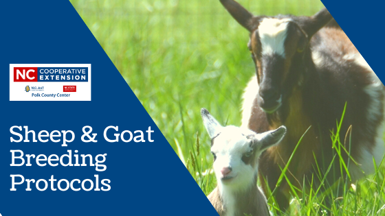 Sheep and Goat Breeding Protocols