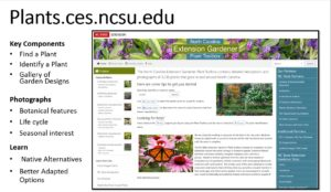 Home Page Plants.ces.ncsu.edu