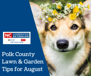 What to Do In Your Garden in August in Polk County NC