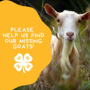 Polk County 4-H Goats Missing
