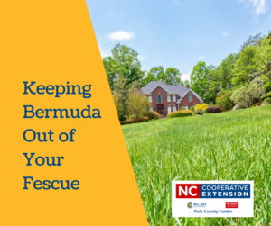 How to Kill Bermuda Grass In Your Lawn