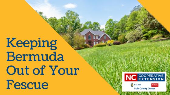 How to Kill Bermuda Grass in Fescue Lawn