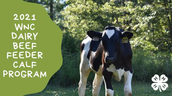 2021 WNC Dairy Calf Program