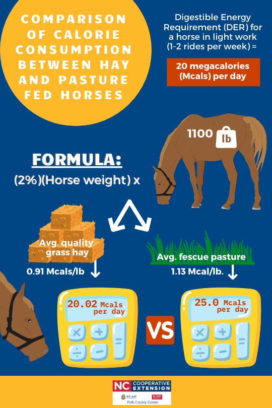 Calorie Content of Hay vs Pasture for Horses