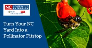 Starting a Pollinator Garden in NC