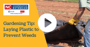 Cover photo for Video: Laying Down Plastic for Weed Prevention