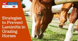 Strategies to Prevent Laminitis in Grazing Horses