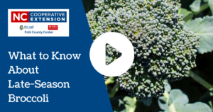 What to Know About Late Season Broccoli