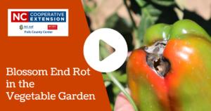 Blossom End Rot in the Vegetable Garden