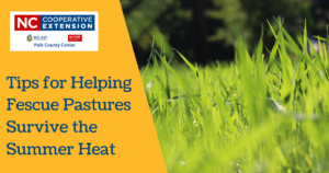 Tips for Helping Fescue Pastures Survive the Summer Heat