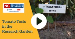 Research Garden Test: Tomato Varieties